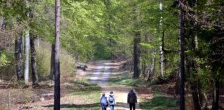 Waldfühlen, Waldbaden und Waldspaziergang: Am 4. Juli können Interessierte auf vielfältige Weise den Naturpark Dübener Heide kennenlernen. Foto: Nico Fliegner